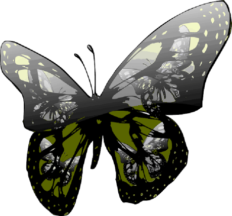 butterfly-gloss-insect
