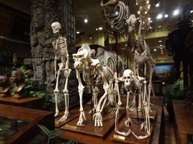 public-museum-skeletons